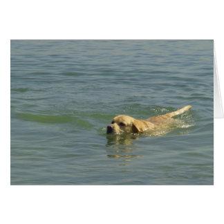 Spaßzeit - Labrador-Schwimmen im Ozean Karte