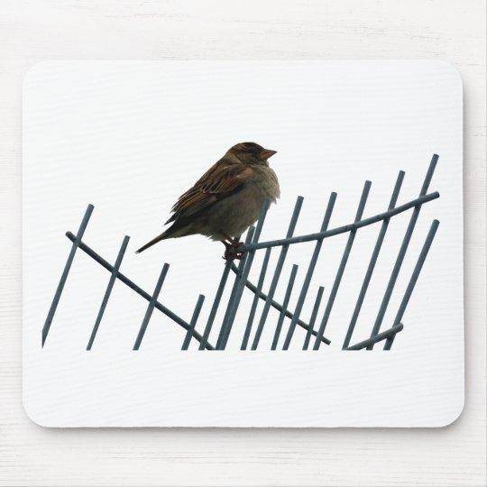 Spatz auf Zaun - Foto Mauspad