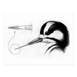 Specht-Zunge-Anatomie Postkarte