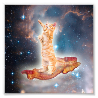 Speck-surfende Katze im Universum Photographien