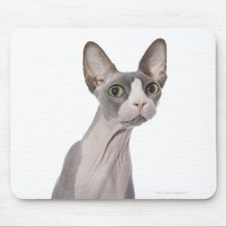 Sphynx Katze mit überraschtem Ausdruck Mousepad
