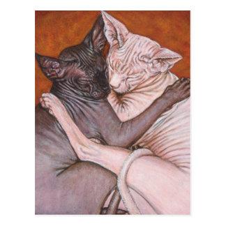 Sphynx Sphinx-Katzen-Katzen-Nickerchen-Zeit Postkarte