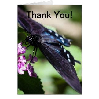 Spicebush Frack Papilio Troilus Karte