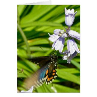 Spicebush Frack-Schmetterling auf Hyazinthen-Karte Karte