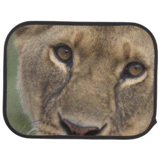 Spiel-Reserve Afrikas, Kenia, Masai-Mara, 2 Automatte