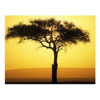 Spiel-Reserve Afrikas, Kenia, Masai-Mara, steigend Postkarte