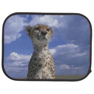 Spiel-Reserve Kenias, Masai-Mara, Nahaufnahme Autofußmatte