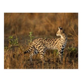 Spiel-Reserve oberen Maras, Masai-Mara, Kenia, Postkarte
