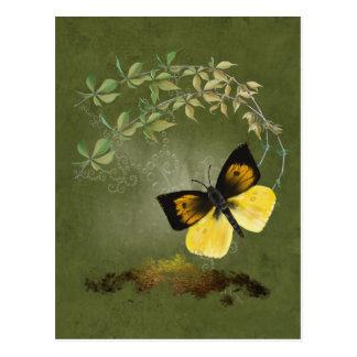 Spielerische gemalte Schmetterlings-Postkarte Postkarte