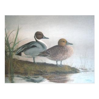 Spießenten-Enten Postkarte