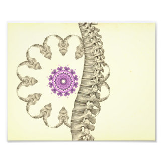 Spinale Anatomie-Grafik-Chiropraktik Kunstphotos