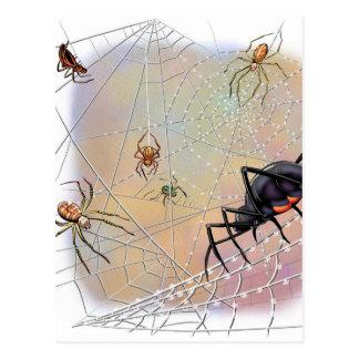Spinnen-Postkarte Postkarte