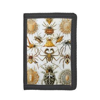 Spinnenartige Tiere durch Ernst Haeckel, Vintage