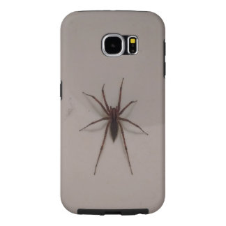 Spinnenfall