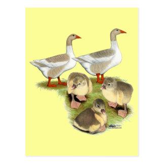Spitz-Gans-Familie Postkarte