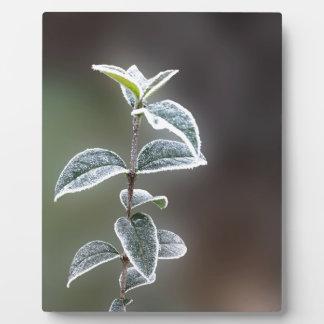Spitze auf Blätter Fotoplatte