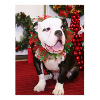 Spitze - englische Bulldogge - Kahley Postkarte
