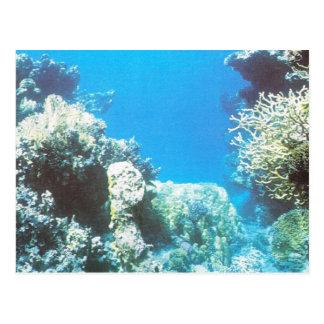 Sporttauchenlandschaft im Roten Meer Postkarte