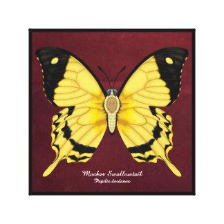 Spötter-Frack-Schmetterling Leinwanddruck