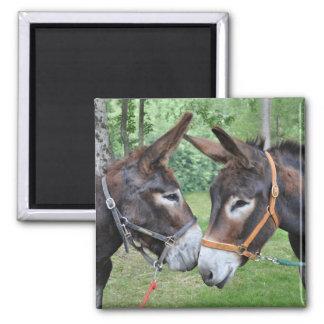 Sprichwort mit zwei Eseln hallo Quadratischer Magnet