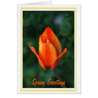 Spring Greetings Grußkarte