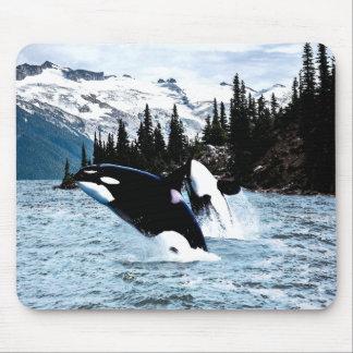 Springen des Schwertwals Mousepad