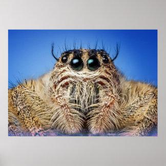 Springende Spinne Poster