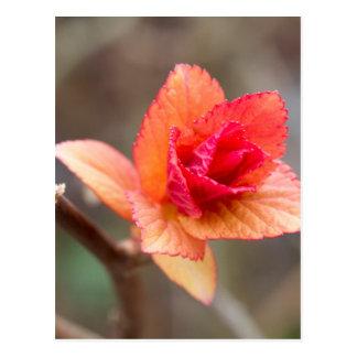 Sprössling im Frühjahr Postkarte