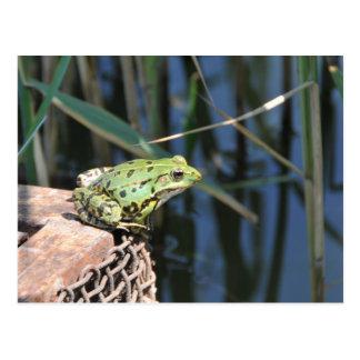 Sprung - grüner Frosch in See Postkarte