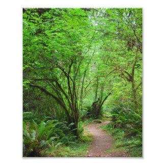 Spur im Rotholz-Wald Fotodruck