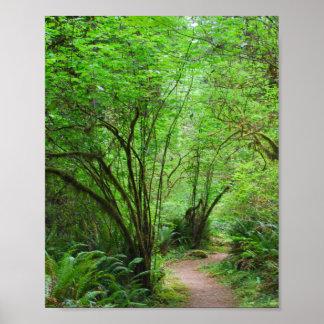 Spur im Rotholz-Wald Poster