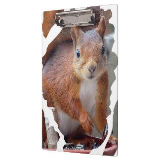 Squirrel ~ Écureuil ~ Eichhörnchen ~ by JL GLINEUR Klemmbrett