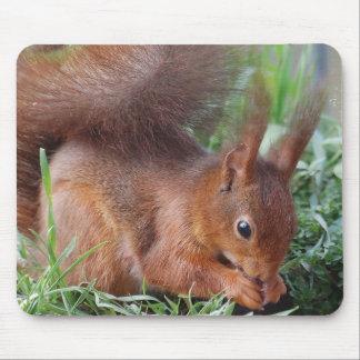 Squirrel ~ Écureuil ~ Eichhörnchen ~ by JL GLINEUR Mousepad