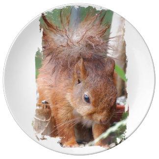Squirrel ~ Écureuil ~ Eichhörnchen ~ by JL GLINEUR Teller