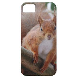 Squirrel Eichhörnchen Écureuil - Jean-Louis Glineu Barely There iPhone 5 Hülle