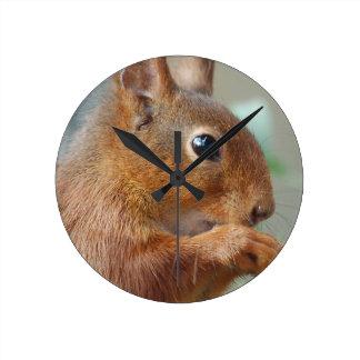 Squirrel Eichhörnchen Écureuil Runde Wanduhr