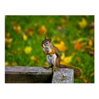 Squirrel in the backyard / Eichhörnchen Postkarten