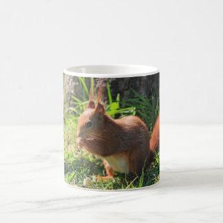 Squirrel rotes niedliches Foto coffe, Tee-Tasse, Tasse