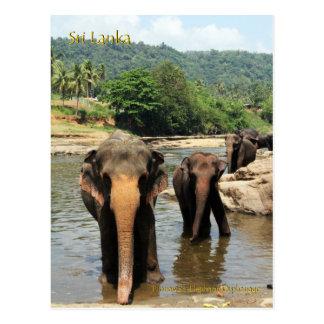 Sri Lanka, Pinnawala Elefant-Waisenhaus Postkarte
