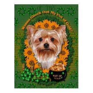St. Patricks - Goldschatz - Yorkshire Terrier Postkarte