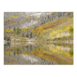 Staatlicher Wald USA, Colorado, White River, 2 Postkarte