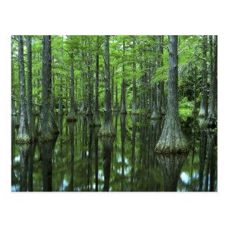 Staatlicher Wald USA, Florida, Apalachicola, kahl Postkarte