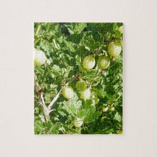 Stachelbeerfrucht auf Bush Puzzle
