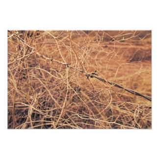 Stacheldraht in der Tumbleweed-Fotografie Photodruck