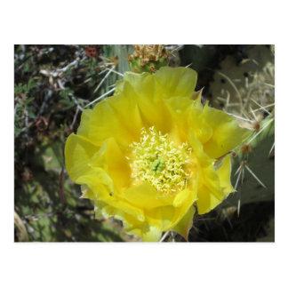 Stachelige Birnen-Gelb-Blüte nah Postkarte