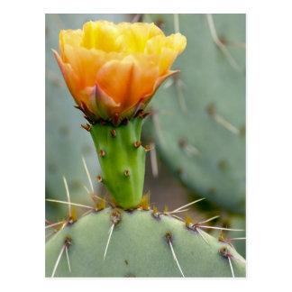 Stachelige Birnen-Kaktus-Blume Postkarte
