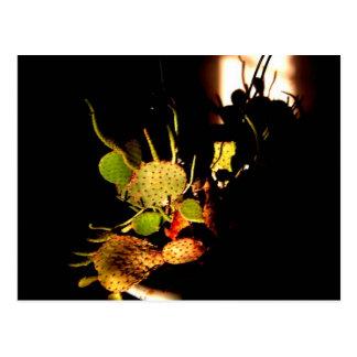Stachelige Pflanzen Postkarte