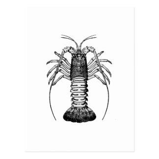 Stacheliger Hummer (Kalifornien) Postkarte