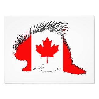 Stachelschwein Kanada Fotodruck