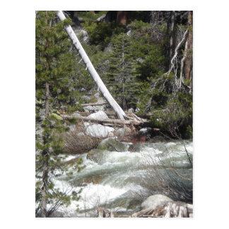 Stachelschwein-Nebenfluss Yosemite Postkarte